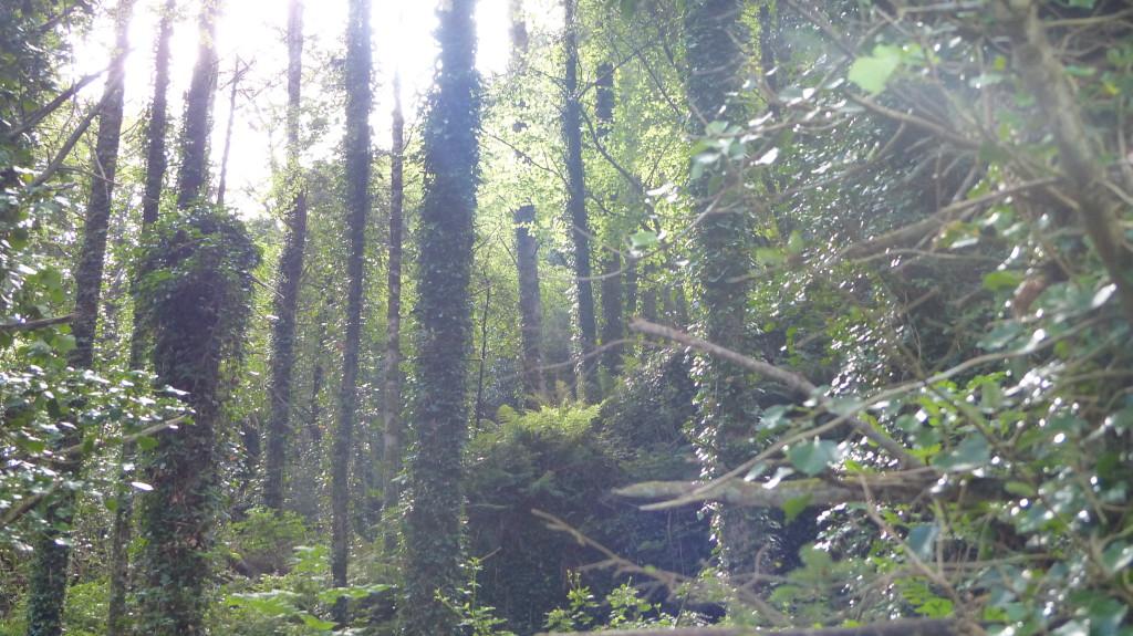 ANU trees